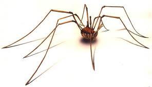cellar spider control miami
